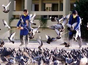 Iran cảnh giác cao với cúm gà