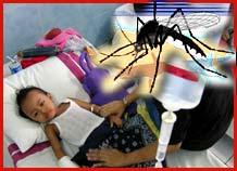 Dịch cúm muỗi đang hoành hành tại đảo Reunion