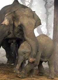 Kế hoạch hành động bảo vệ voi