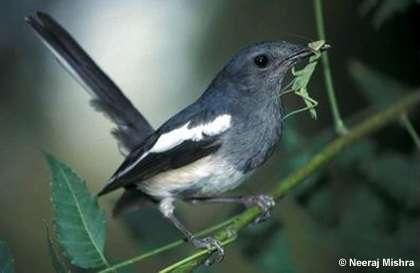 Hong Kong xác nhận có chim hoang dã chết vì H5N1