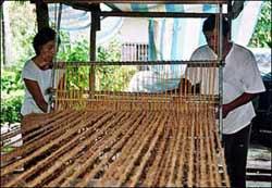 Biến vỏ dừa thành lưới chống xói mòn