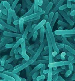 Ngộ độc thực phẩm và cách phòng tránh