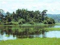 WWF cảnh báo sự thu hẹp dần diện tích các vùng đất ngập nước