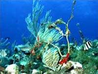 Tìm thấy kho tàng sinh vật dưới đáy biển