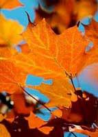 Tại sao một số cây có lá nhọn?