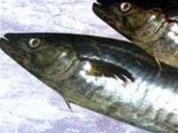 Bảo vệ sức khỏe với cá acid béo omega-3