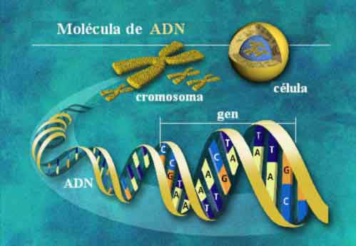 Phương pháp thử nghiệm ADN mới của Canada