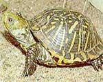 Rùa cứu nạn và do thám