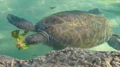 Đảo Rùa - Quần đảo Colon
