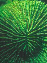 Nha Trang: Sinh vật biển phát sáng