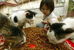 Mèo nhiễm vi rút H5N1?
