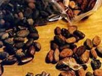 Cacao giúp giảm huyết áp