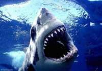 10 loài vật nguy hiểm nhất thế giới