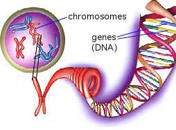 Phát hiện các nhiễm sắc thể bất thường mới