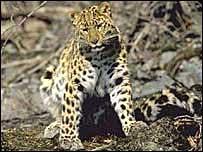 Ngăn chặn động vật tuyệt chủng