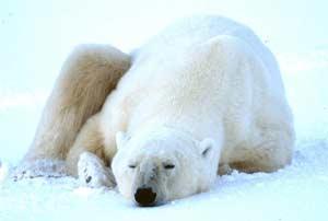 Sự ngủ đông của động vật