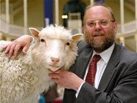 """GS Wilmut không phải là """"cha đẻ"""" của cừu Dolly"""