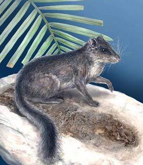 Sinh vật trở về từ cõi chết sau 11 triệu năm