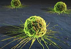 Phát hiện hợp chất mới có thể chống bệnh ung thư