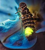 Tác dụng của nước bọt động vật
