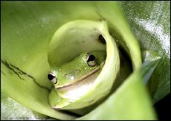 Đại chiến kinh hồn giữa bọn ếch nhái