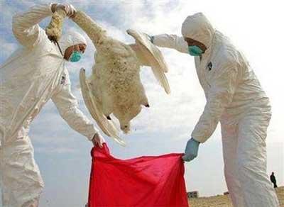 Con chó đầu tiên chết vì cúm gà