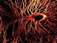 Trung Quốc tái tạo thành công dây thần kinh đã bị hỏng