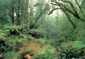 Tại sao những vùng rừng núi thường mưa nhiều?