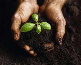 Cách truyền đời tuyệt diệu của thực vật