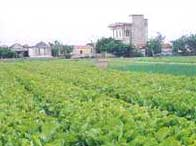 Trồng rau không dùng đất