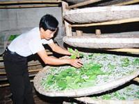 Thanh Hóa: Số người bị ngộ độc do ăn tằm, nhộng tằm tăng vọt