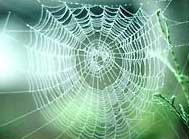 Bí mật của tơ nhện