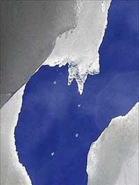 Nhiệt độ Nam cực đang tăng nhanh
