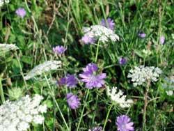 Nghiên cứu thảm thực vật khu bảo tồn thiên nhiên