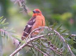 Đến 2100, gần 10% loài chim bị tuyệt chủng