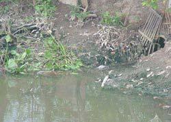 Công nghệ xử lý nước sông, kênh, rạch ô nhiễm