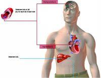Mỡ trong máu có 2 dạng chính là cholesterol và triglycerid.