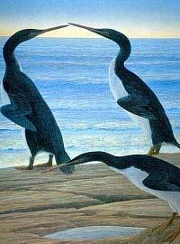 Cánh cụt sống sót qua thời điểm khủng long tuyệt chủng