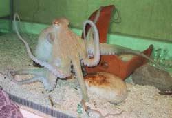 Đắc Lắc: Ngộ độc vì ăn vòi mực
