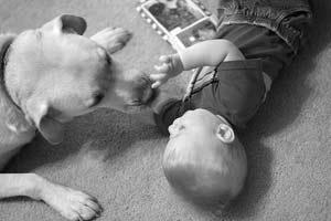 Cảnh giác những bệnh lây truyền từ chó