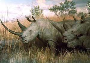 Hơn 152 loài động vật và thực vật quý hiếm đang có nguy cơ tuyệt chủng