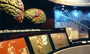 Tìm hiểu về khoa học nhân thể