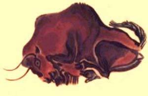 bisonte altamira300