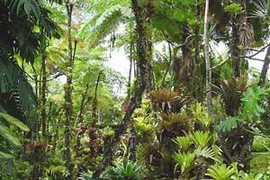 Giải mã bí ẩn vì sao rừng nhiệt đới nhiều loài hơn ôn đới