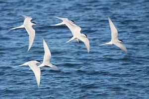 Điều bí ẩn về sự di trú của chim và côn trùng