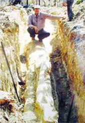 Phát hiện một cây gỗ hóa thạch dài 200 triệu năm tuổi
