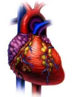 Mô hình quả tim