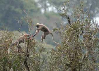 Phát hiện một chi khỉ mới ở châu Phi