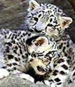 Nhật tặng bộ động vật cho Thảo Cầm Viên