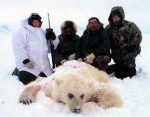 Gấu Bắc cực có thể lai với gấu nâu